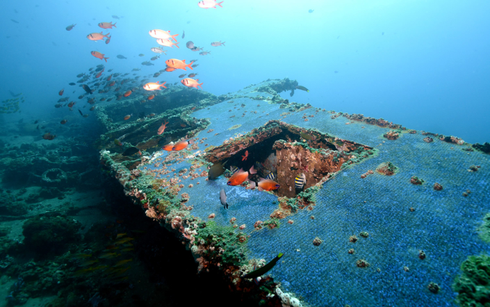 Wreck of Dive Society Dauin
