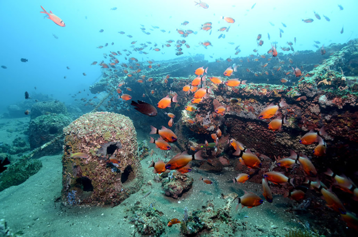 Reef Conservation Project Dive Society Dauin